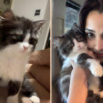 Entertainment: Daisy Shah Introduces Lizzy the New Member Of The Family!
