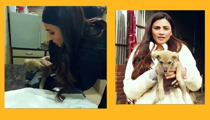 Daisy Shah Rescues a Puppy in Distress on The Sets of 'See You In Court'